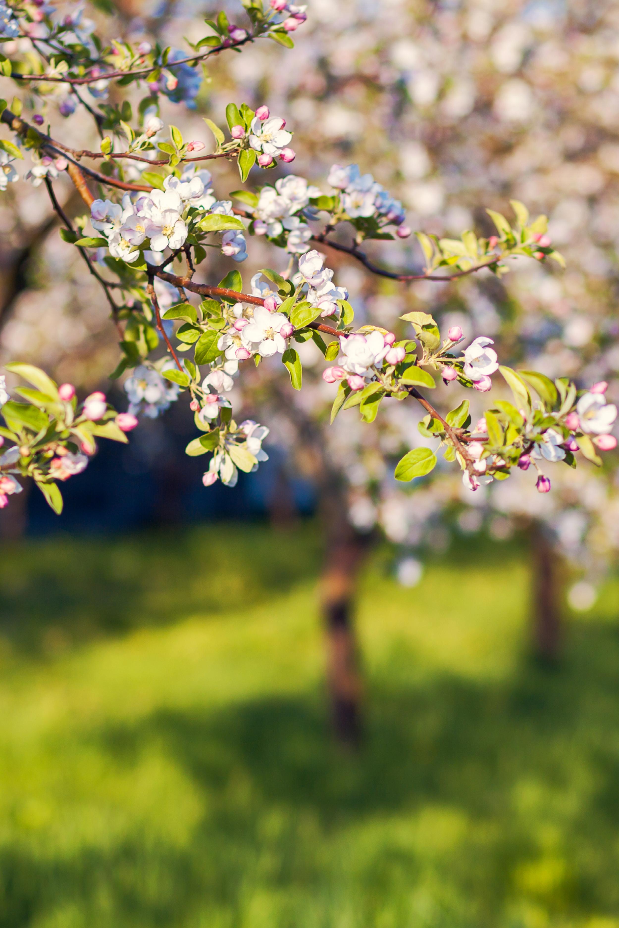 spring-garden2.png